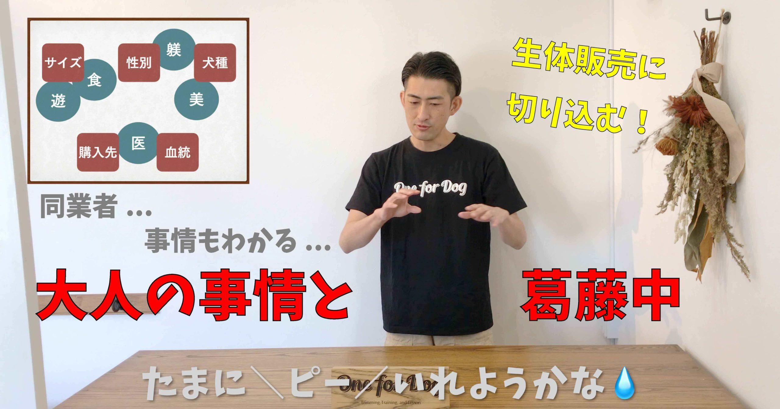 """オンラインセミナーVo.4【犬を飼う前に知っておきたいこと】""""購入先と血統"""""""