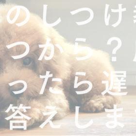 愛犬のしつけ教室はいつから?成犬になったら遅い?にお答えします!