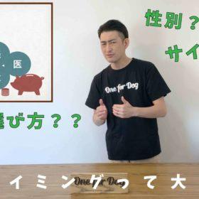 """オンラインセミナーVo.3【犬を飼う前に知っておきたいこと】""""サイズと性別"""""""